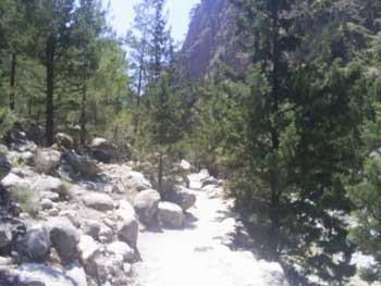 Forest in the Samaria Gorge